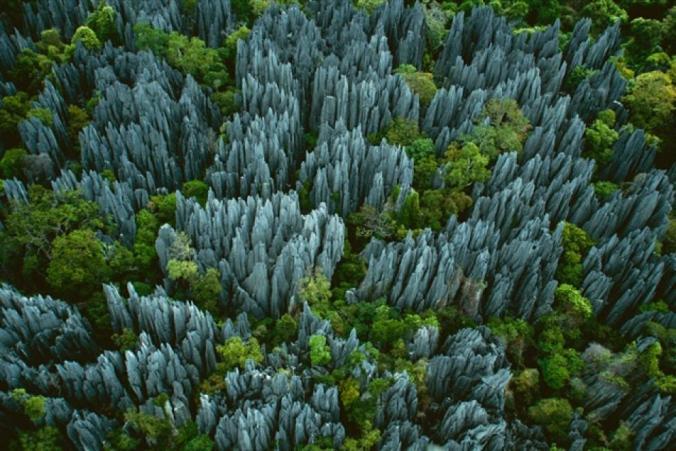 forestspeople-01
